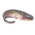 Jumbo Fish Stock 1kg